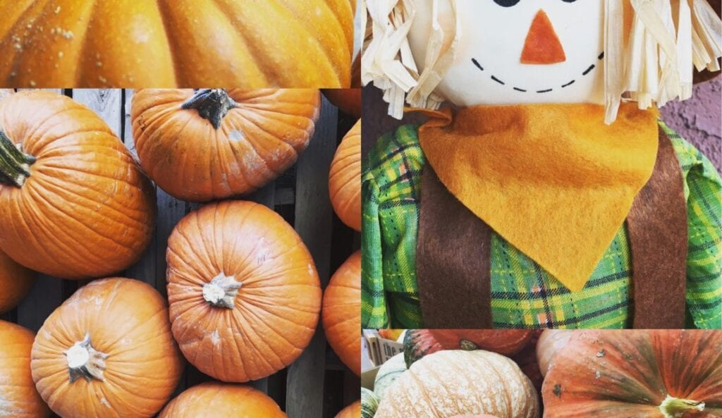 pumpkins and a scarecrow doll